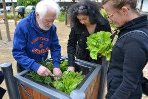 Plantations et entretien des carrés botaniques, place d'Iroise