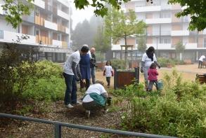 Installation de carrés botaniques place d'Iroise sous la houlette des Biaux jardins