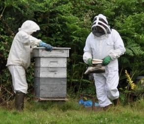 Annonce Ploufragan estivale 18 abeilles