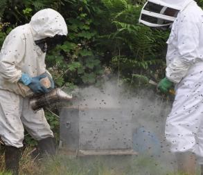 annonce Ploufragan Estivale 18 abeilles 1