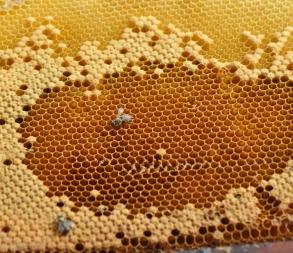 Annonce abeilles 3