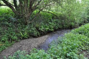 Végétation naturelle dans la vallée du Goëlo