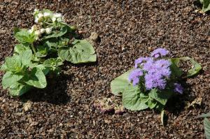 Parterre de fleurs à Ploufragan